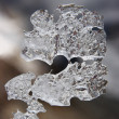 Stock Photo: Natural ice shape resembling question si