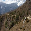 Stock Photo: Mountain trail in Himalayas, Nepal