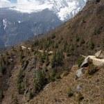 Mountain trail in Himalayas, Nepal — Stock Photo