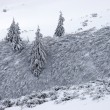 Fir trees and bush covered with snow — Foto Stock