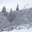 Fir trees and bush covered with snow - Stock Photo