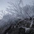 Bush on rock covered with frost — Stockfoto #1377376