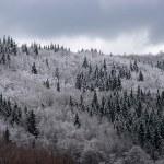 bosque mixto de montaña cubiertos de escarcha — Foto de Stock