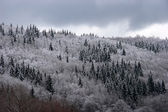 Mixed mountain forest covered with frost — Stock Photo