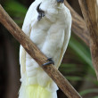 Stock Photo: White macaw parrot