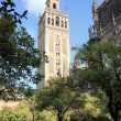 Catedral & La Giralda, Sevilla — Stock Photo
