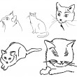 Vector images of a cat on a white backgr - Stock Vector