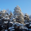 Stock Photo: Forest at sunny winter day