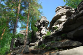 Rocks among the trees — Stockfoto