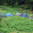 Stock Photo: Tents on glade with cedars