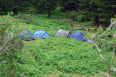 Tents on glade with cedars — Stockfoto