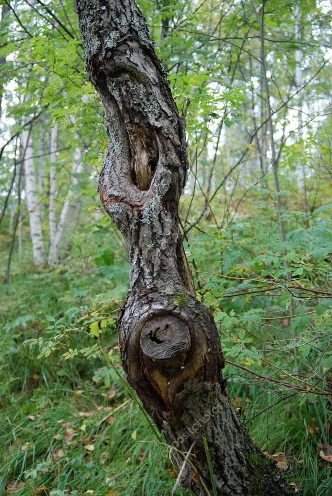 Stem of dead tree in the forest — Stock Photo #1353684
