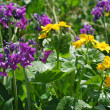 Flowers on alpine field — Stock Photo