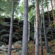 Rocks among the trees — Stock Photo