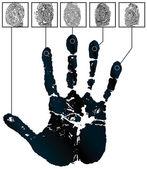 Fingers — Stock Vector