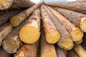 Logs of pine — Stock Photo