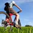 Mountain biker. — Stock Photo #1254987