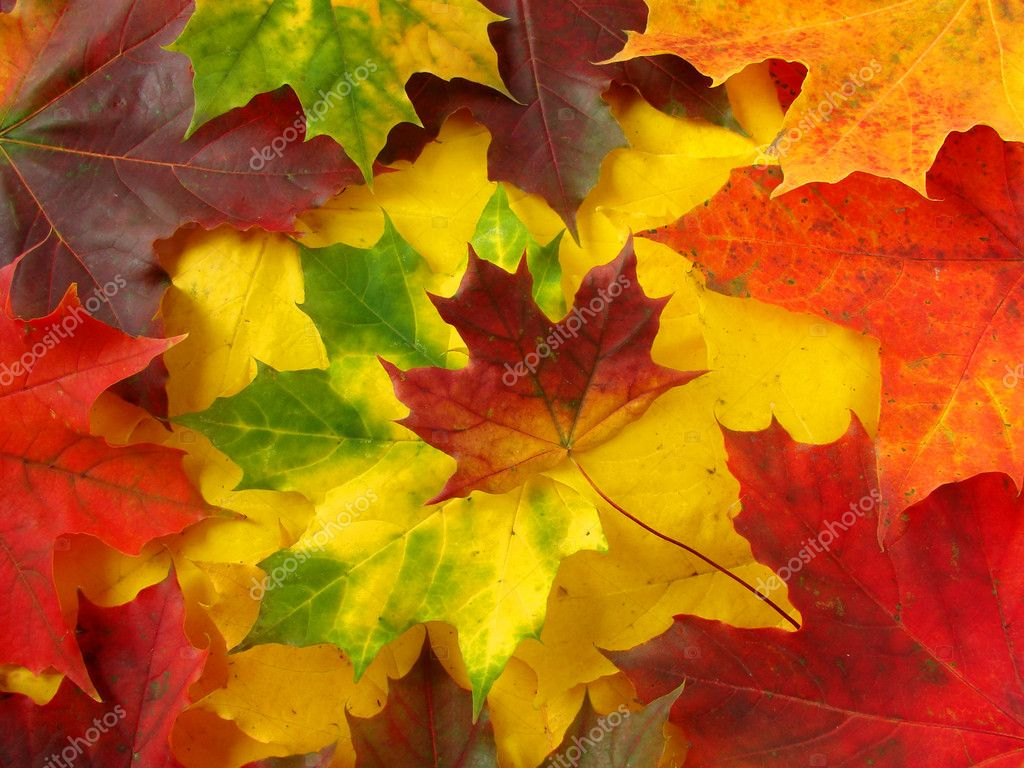Awesome colors of dry maple leaves in Autumn                                — Stock Photo #1075355
