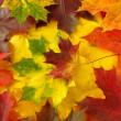 Royalty-Free Stock Photo: Autumnal background