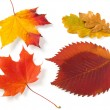 Autumnal leaves — Stock Photo #1092800