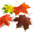 Autumnal leaves palette — Stock Photo