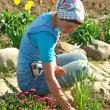 Flowers sowing — Stock Photo
