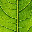 Leaf — Stock Photo #1098666
