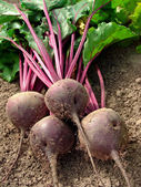 Beetroot — Stock fotografie