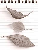 Autumnal notepad — Stock Photo