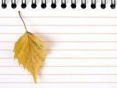 黄色の葉でメモ帳 — Stock fotografie