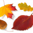 Stock Photo: Four autumnal leaves