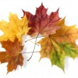 Autumnal leaves — Stock Photo #1112244