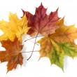 Foto de Stock  : Autumnal leaves