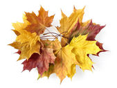 Autumnal garland — Stock Photo