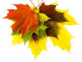 Autumnal palette — Stock Photo