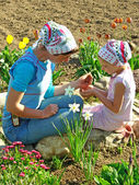 Flowers sowing together — Stock Photo