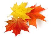 3 つのカエデの葉 — ストック写真