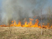 野火 — ストック写真