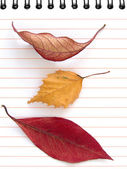 Autumnal notes — Stock Photo