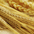 Stock Photo: Grain ears