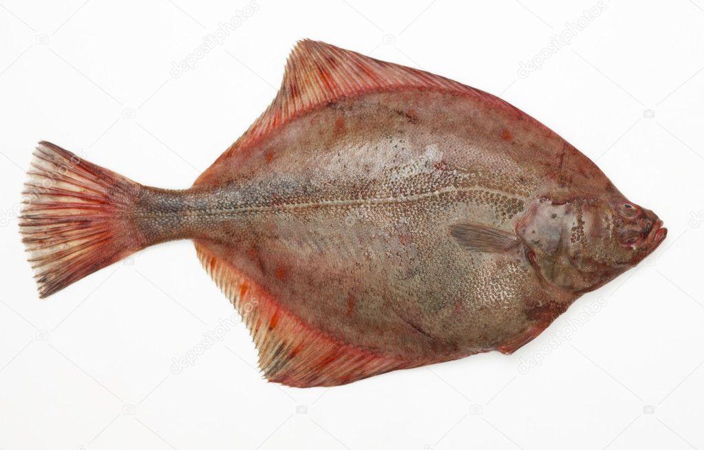 Big raw fish stock photo magone 1117437 for Big fish script