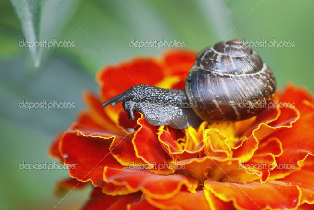 Snail macro — Stock Photo #1144249