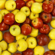 Stock Photo: Red and yellow apples