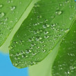 Raindrops on green leaves — Stock Photo