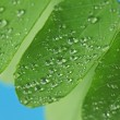 Raindrops on green leaves — Stock Photo #1188482
