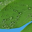 Green leaf with raindrops — Stock Photo #1189286
