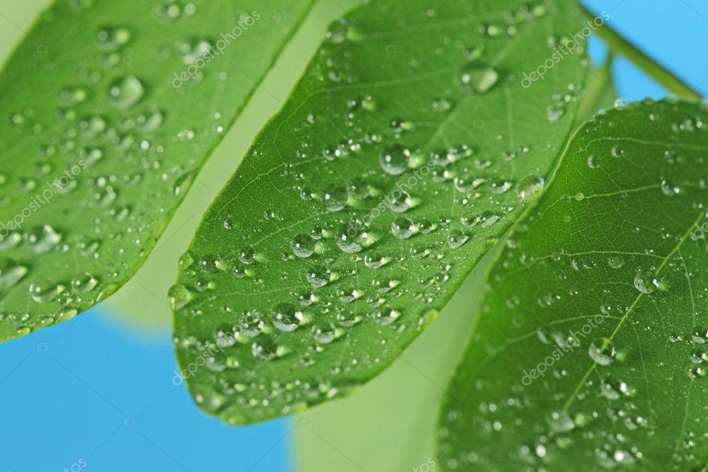 在绿色的树叶上的雨滴