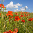 Field of red poppies — Stock Photo #1083809