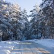 Winter road, forest — Stock Photo #1085292