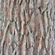 Royalty-Free Stock Photo: Bark of a tree, an abstract background